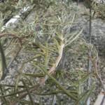 Getrocknete mediterrane Kräuter